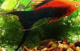 Рыбки, растения, улитки